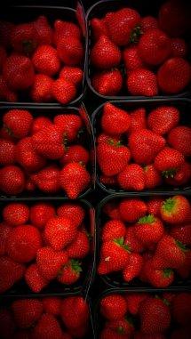 dutch strawberries