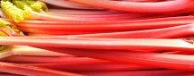 closeup of forced pink rhubarb stalks