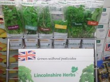 Potted herbs on a marketing stand