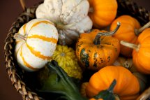 pumpkins and squashes in a basket