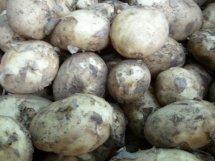 closup of jersey royal new potatoes
