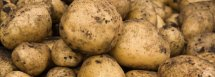 closeup of potatoes