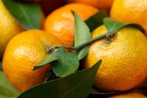 closeup of leafy italian clementines
