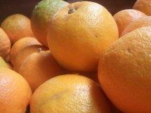Seville oranges - closeup
