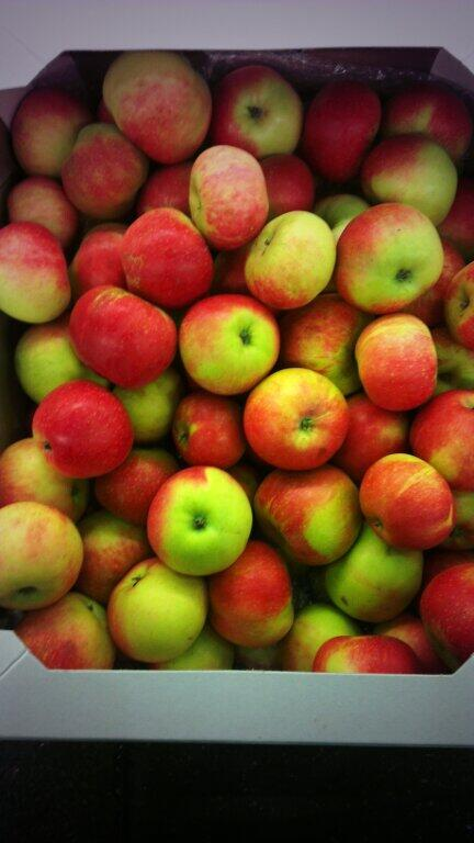 discovery apples in a cardboard box