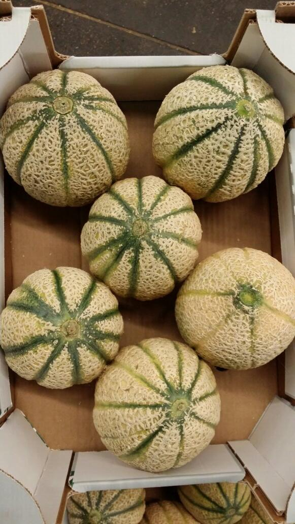 cantaloupe melons in a cardboard tray