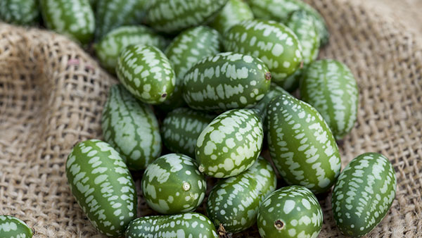 Cucamelon fruit, also known as Mexican gherkins, Mexican sour cucumbers, or Melothria Scabra on a burlap sack background.