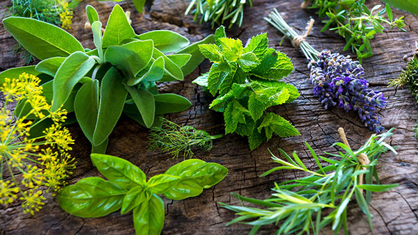 Fresh herbs on wooden background, sage, basil, mint, rosemary, lavender