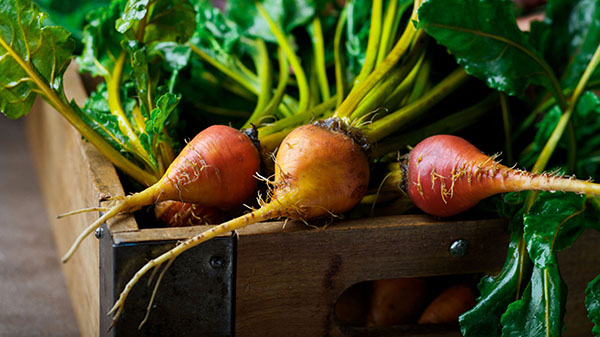 golden bunched beetroot (root vegetables category)