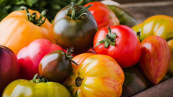 Mixed heritage tomatoes (salads category)